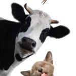 Win een cadeaubon met de gratis dierenquiz