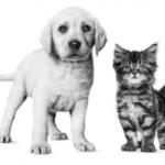 Vraag een gratis puppy- of kittenpakket aan!