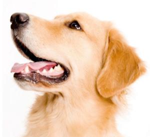 Krijg een gratis probeerpakket Biofood voor je hond