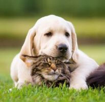 ontvang een gratis probeerpakket voor hond of kat